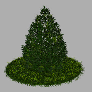 buxus-plant-cone-shape-3d-model-on-grass-8
