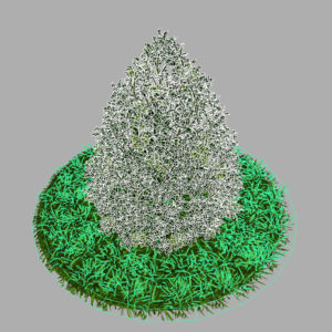 buxus-plant-cone-shape-3d-model-on-grass-9