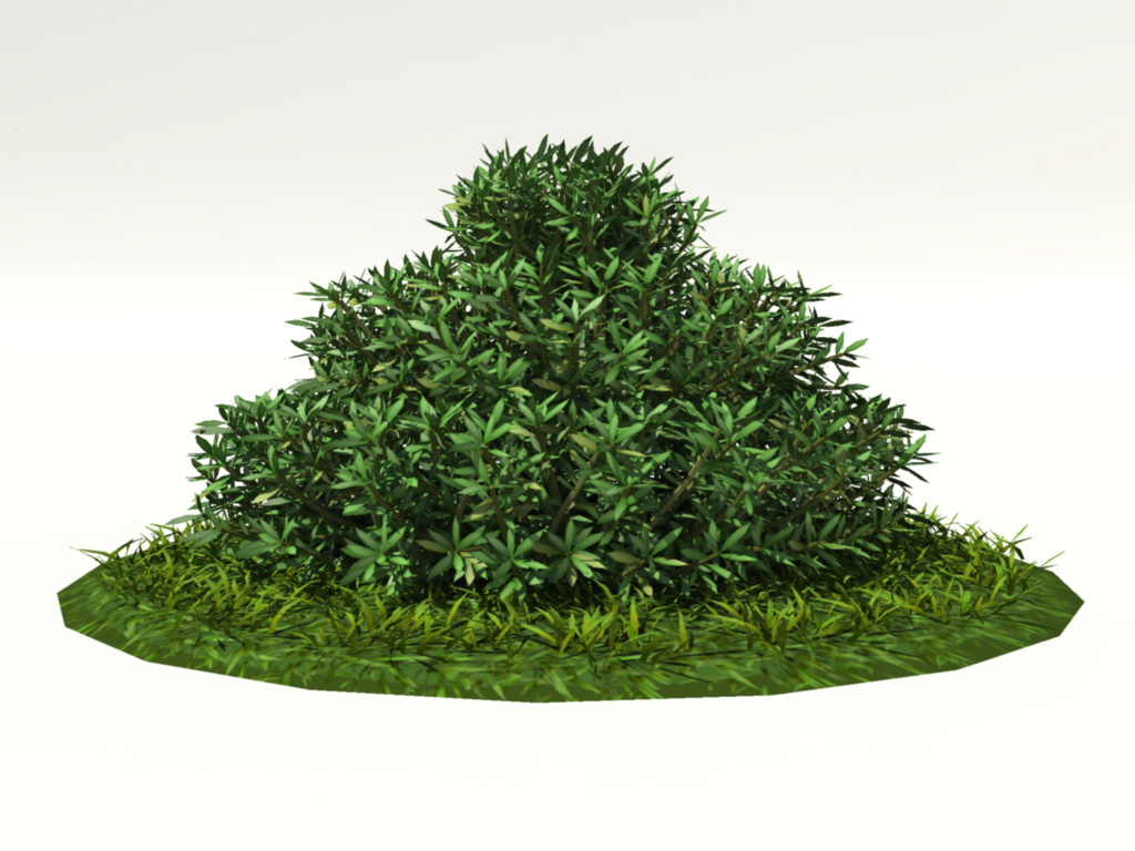 buxus-shrub-long-leaf-3d-model-1