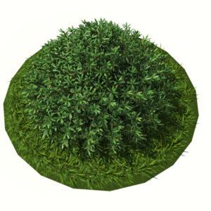 buxus-shrub-long-leaf-3d-model-3