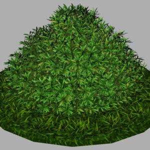 buxus-shrub-long-leaf-3d-model-6