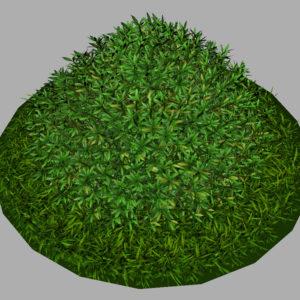 buxus-shrub-long-leaf-3d-model-7
