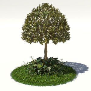 buxus-tree-with-ivy-grass-3d-model-1