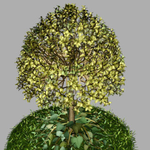 buxus-tree-with-ivy-grass-3d-model-10