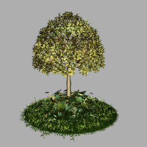 buxus-tree-with-ivy-grass-3d-model-11