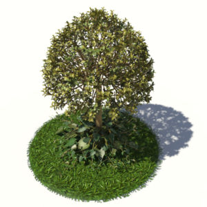 buxus-tree-with-ivy-grass-3d-model-2