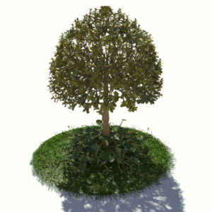 buxus-tree-with-ivy-grass-3d-model-3