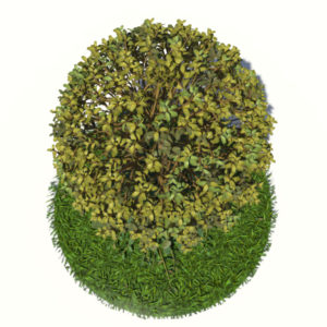 buxus-tree-with-ivy-grass-3d-model-4