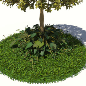 buxus-tree-with-ivy-grass-3d-model-5
