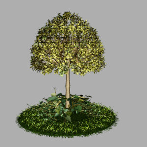 buxus-tree-with-ivy-grass-3d-model-7