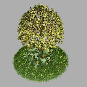 buxus-tree-with-ivy-grass-3d-model-8
