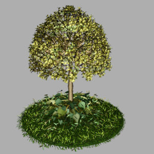 buxus-tree-with-ivy-grass-3d-model-9