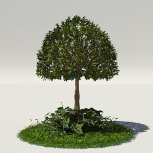 buxus-young-tree-on-grass-3d-model-circular-1