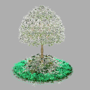 buxus-young-tree-on-grass-3d-model-circular-10
