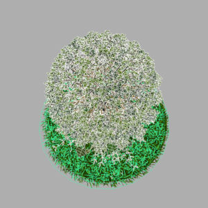 buxus-young-tree-on-grass-3d-model-circular-11