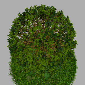buxus-young-tree-on-grass-3d-model-circular-12