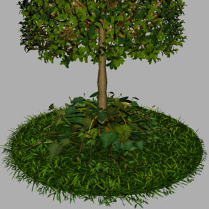 buxus-young-tree-on-grass-3d-model-circular-13