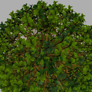 buxus-young-tree-on-grass-3d-model-circular-14