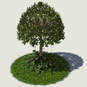 buxus-young-tree-on-grass-3d-model-circular-2