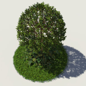 buxus-young-tree-on-grass-3d-model-circular-3