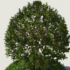 buxus-young-tree-on-grass-3d-model-circular-4