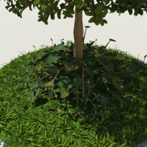 buxus-young-tree-on-grass-3d-model-circular-5