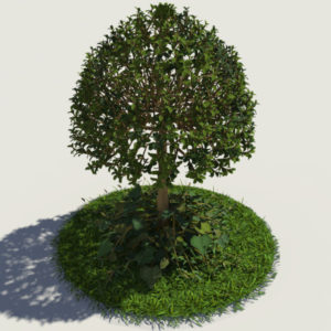 buxus-young-tree-on-grass-3d-model-circular-6