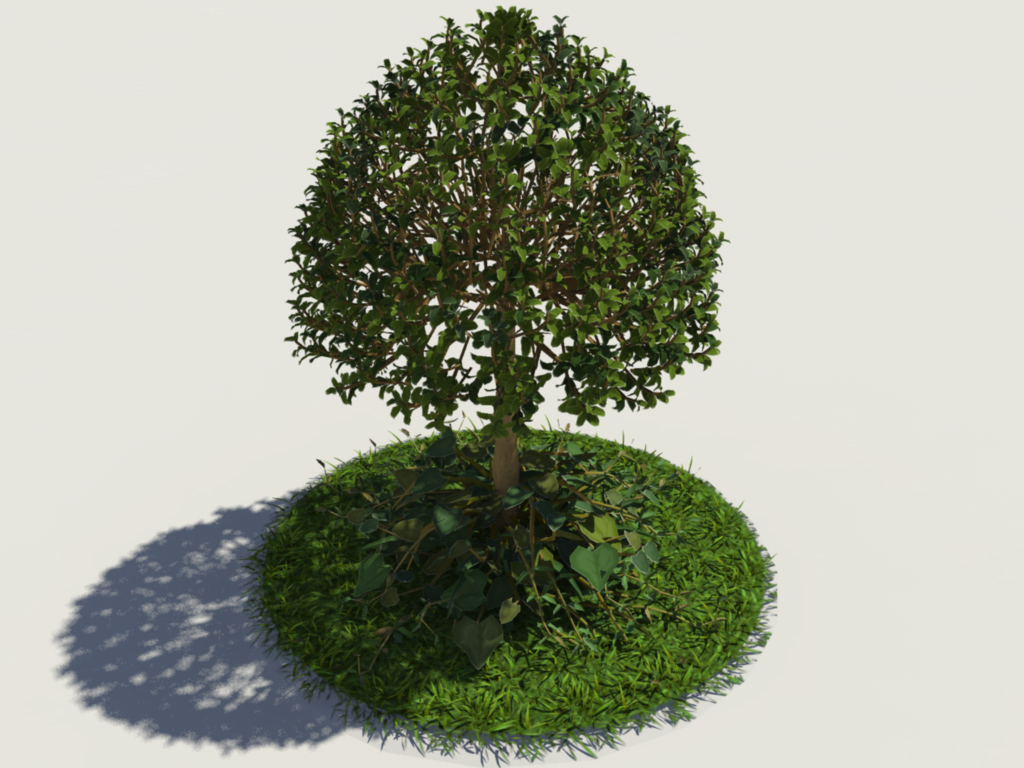 Buxus Young Tree On Grass 3D Model - Realtime - 3D Models World