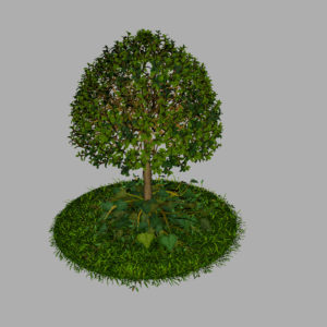 buxus-young-tree-on-grass-3d-model-circular-7