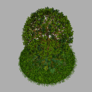 buxus-young-tree-on-grass-3d-model-circular-8