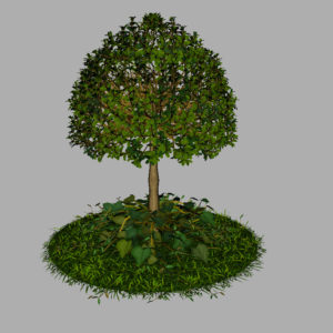 buxus-young-tree-on-grass-3d-model-circular-9