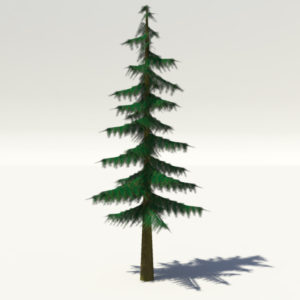 conifer-pine-tree-3d-model-1