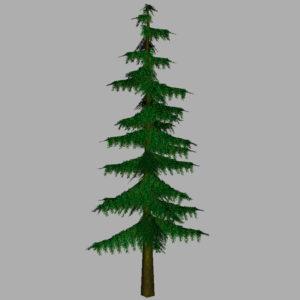 conifer-pine-tree-3d-model-10