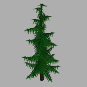 conifer-pine-tree-3d-model-11