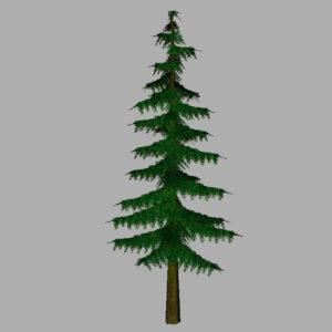 conifer-pine-tree-3d-model-12
