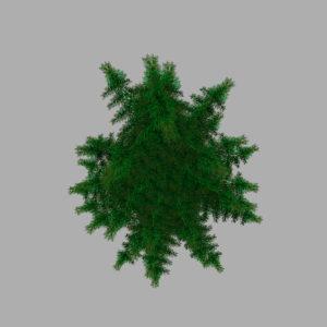 conifer-pine-tree-3d-model-13