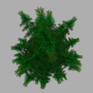 conifer-pine-tree-3d-model-14