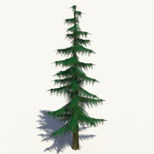 conifer-pine-tree-3d-model-3