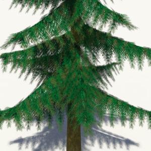 conifer-pine-tree-3d-model-4