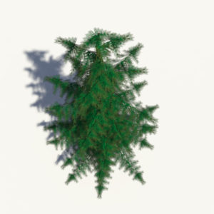 conifer-pine-tree-3d-model-5
