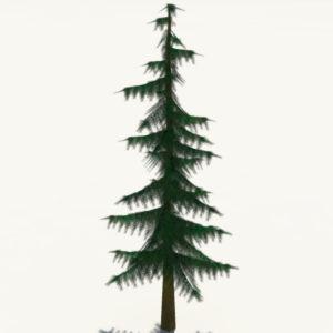 conifer-pine-tree-3d-model-7