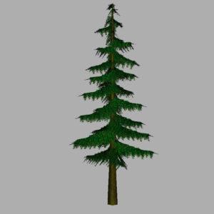 conifer-pine-tree-3d-model-8