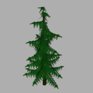 conifer-pine-tree-3d-model-9