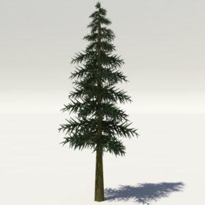 conifer-tree-3d-model-1