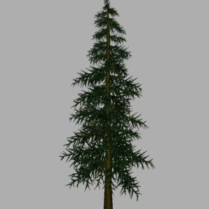 conifer-tree-3d-model-10