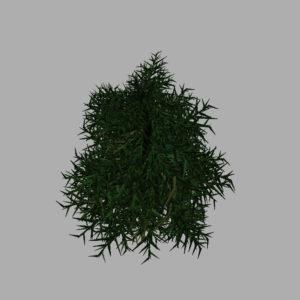 conifer-tree-3d-model-11