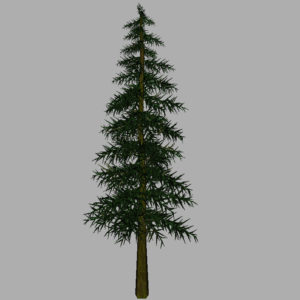 conifer-tree-3d-model-12