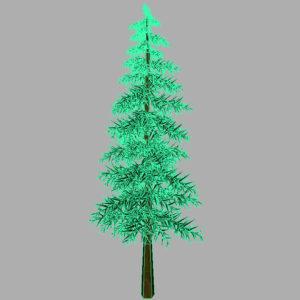 conifer-tree-3d-model-13