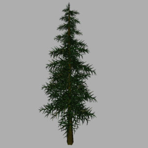 conifer-tree-3d-model-14