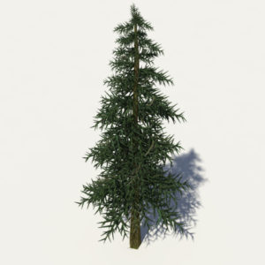 conifer-tree-3d-model-2